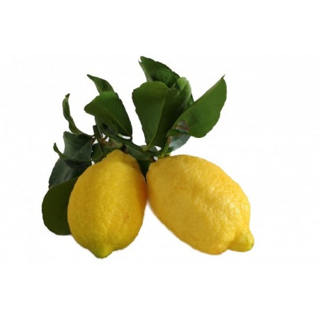 Risultato immagini per limoni